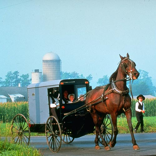 A Taste of Amish Country