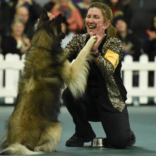 The Westminster Dog Show - Meet and Compete